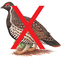 no_grouse